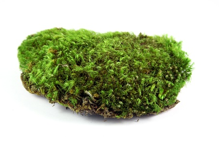 Green moss patch Stock Photo