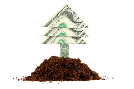 tree growing: Dollar bill tree growing out of a pile of soil