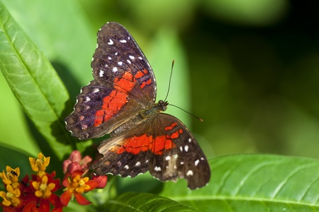 A macro shot of a beautiful butterfly with room for copy space. Stock Photo - 11869770
