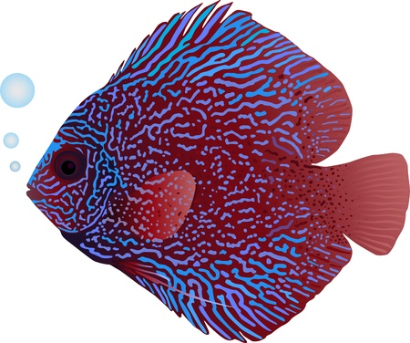 underwater fishes: A detailed illustration of a snakeskin discus fish
