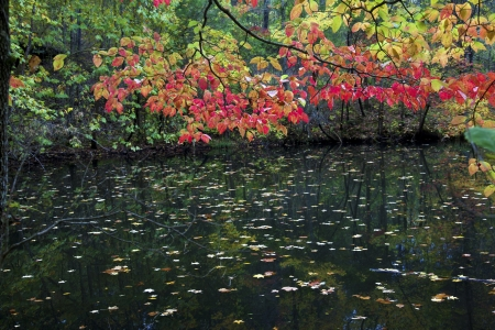 Fall leaves shine over a pond on an Arkansas trail.