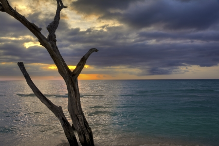 The sun sets behind an old dead tree on the ocean shoreline. Foto de archivo