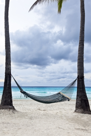 A hammock between two tall palm trees beside the ocean.