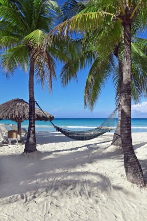 A hammock between two palm trees beside the ocean on a tropical resort. photo