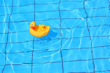 swimm: Rubber duck is swimming in the pool