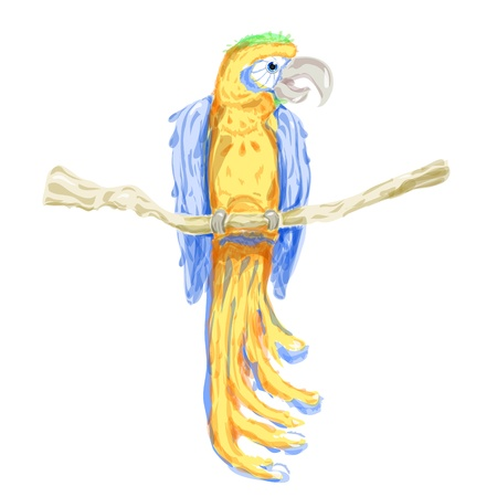 trinidad: Vector Watercolor Parrot yellow with blue wings