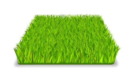 Green grass square realistic isolated vector illustration Illustration