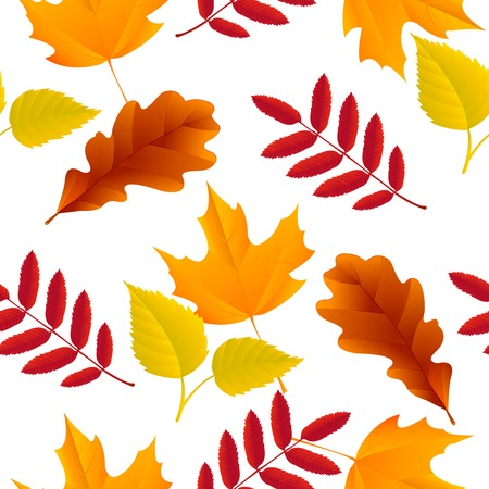 ash: Seamless autumn oak, maple, ash, birch leaves pattern vector illustration