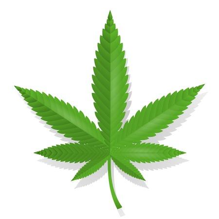 hoja marihuana: Aislado icono de la hoja de cannabis ilustraci�n vectorial Vectores
