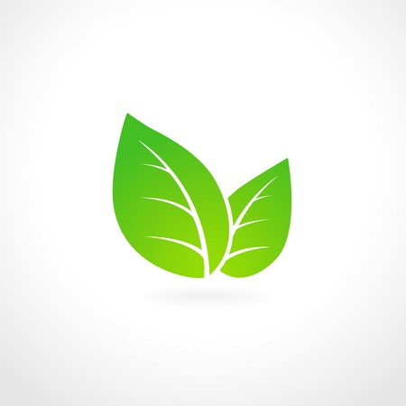 ecology emblem: Green leaf ecology emblem isolated vector illustration