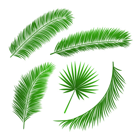 feuille arbre: Collecte de feuilles de palmier isolé illustration vectorielle