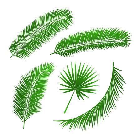 houtsoorten: Het verzamelen van palmbladeren geïsoleerde vector illustratie