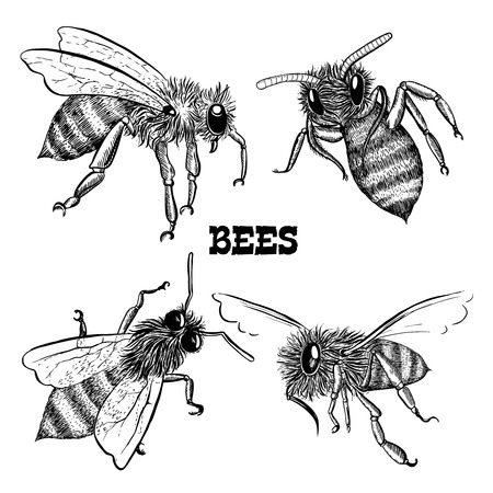 drone: Collections of honey bee icons sketches isolated vector illustration Illustration