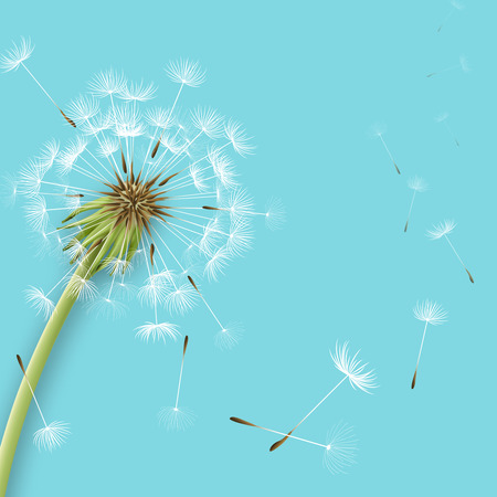 wind: White dandelion with pollens isolated vector illustration
