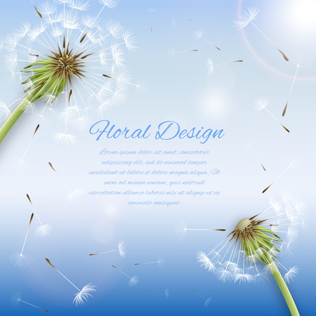 blowing dandelion: White dandelion with pollens background or cover template vector illustration Illustration