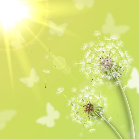 White dandelions with summer sun background vector illustration Vector