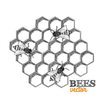 Las abejas de miel y el panal aislado ilustración vectorial