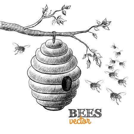 abejas panal: Las abejas de miel y la colmena en la rama de un árbol aislado ilustración vectorial Vectores