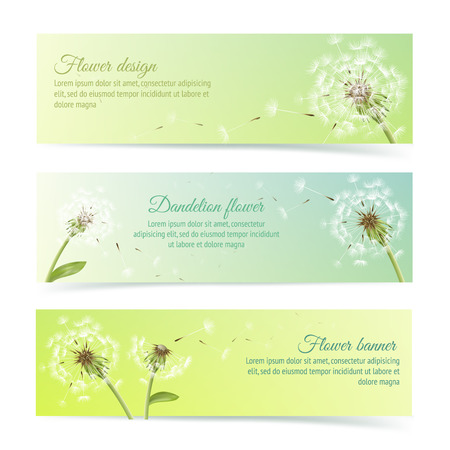dandelion wind: Collection of banners and ribbons with summer dandelion and pollens design elements isolated vector illustration