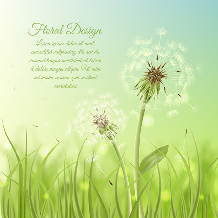 dandelion wind: Floral design poster of dandelion with pollens on green grass background illustration