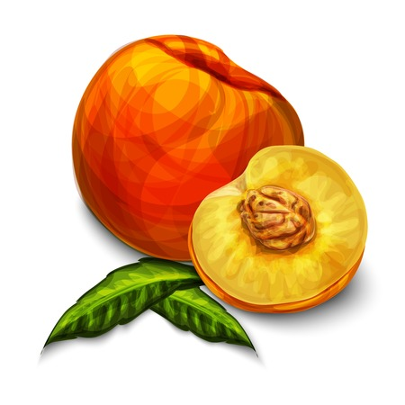 peaches: Orange natural organic sweet peach fruit sliced in half with seed leaves and yellow juicy meat isolated hand drawn sketch illustration Illustration
