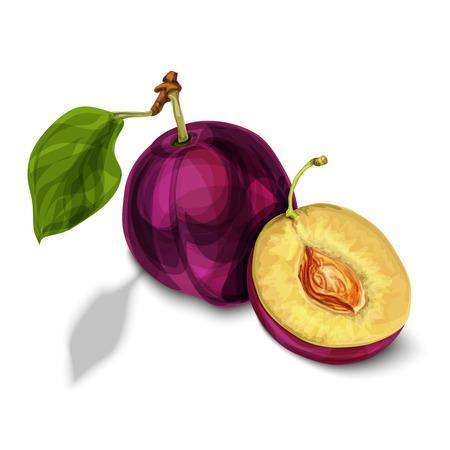 sliced: Azul org�nica fruta dulce de ciruela naturales cortado por la mitad con las hojas de semillas y la carne jugosa aislado amarillo dibujado a mano ilustraci�n boceto