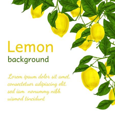 citrus tree: Madura org�nica Natural rama de un �rbol de lim�n jugoso Fondo del marco de la ilustraci�n del modelo del cartel