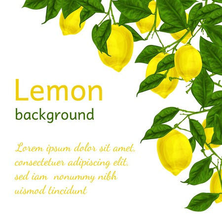 Natural organic ripe juicy lemon tree branch background poster frame template illustration Vector