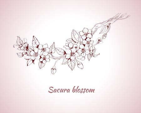 cherries: Sakura blossom decorative print on pink background sketch illustration