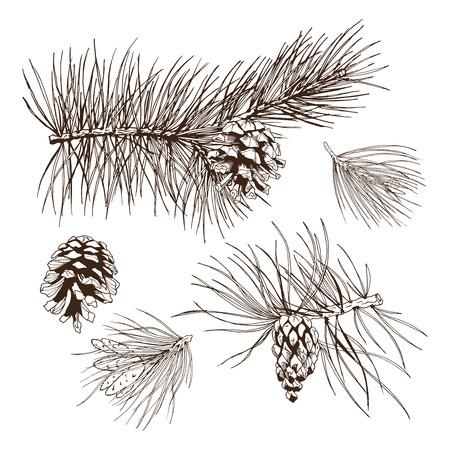pinoli: Rami di abete pino sempreverde albero di Natale ghirlanda elementi decorativi di design, illustrazione vettoriale
