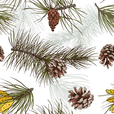 cedar: Colored pine fir branches and cones forest wood seamless pattern vector illustration Illustration