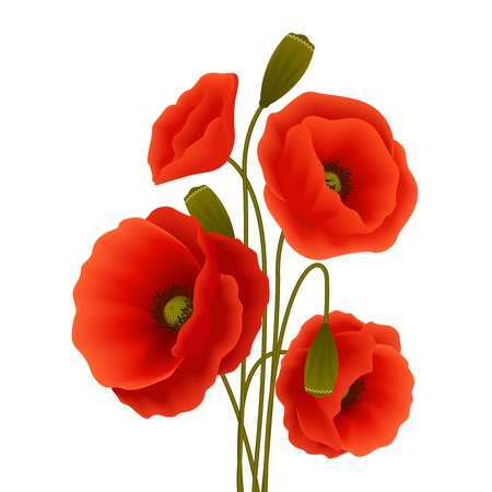 Bunch of red romantic blooming poppy flowers isolated vector illustration