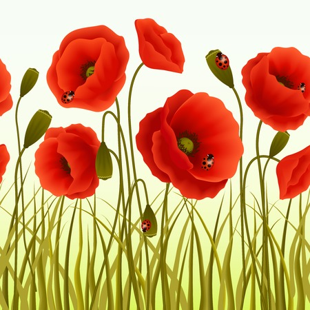 Red romantic poppy flowers and grass with ladybugs wallpaper vector illustration. Illustration