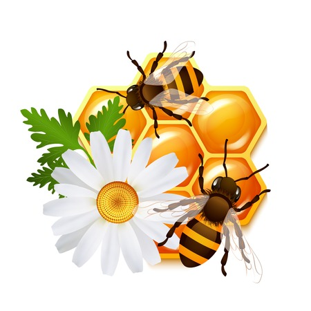 Decorative sweet honeycomb bees and flower camomile emblem vector illustration Vector