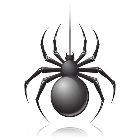 spider web icon: Black scary spider insect isolated on white background emblem vector illustration