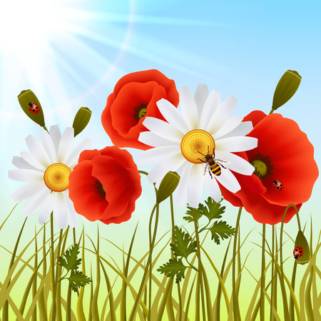 Red romantic poppy flowers white daisies and grass with ladybugs wallpaper vector illustration Vector