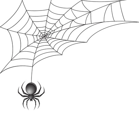 halloween spider: Black scary spider insect with web background