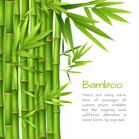 Realista árbol hierba planta de bambú fondo verde japonés oriental ilustración vectorial