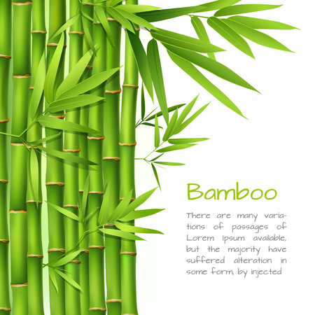 bamboo leaves: Realistic green bamboo plant grass tree oriental japanese background vector illustration