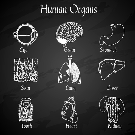 Human organs chalkboard icons set of skin lung liver tooth isolated vector illustration Vector