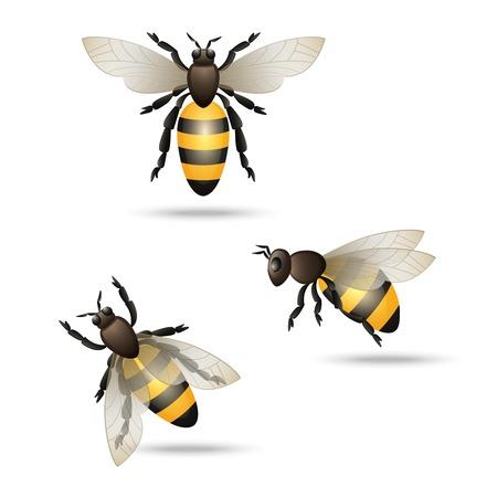 bee stinger: Realistic flying honey bees set isolated on white background vector illustration