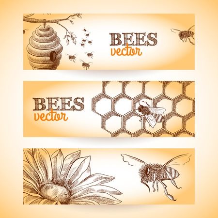 Honey bee hive comb and flower sketch banners set isolated vector illustration.