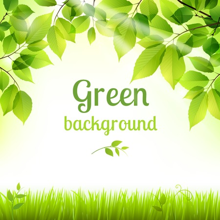 Natural green fresh spring leaves and grass botanic foliage decorative background poster print vector illustration Vector