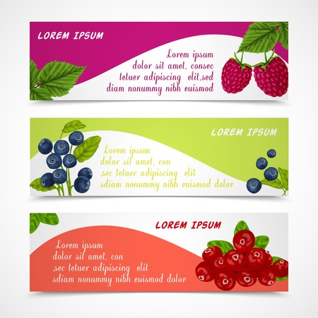 cranberry illustration: Natural organic forest berries banners set of raspberry blueberry cowberry design template vector illustration Illustration