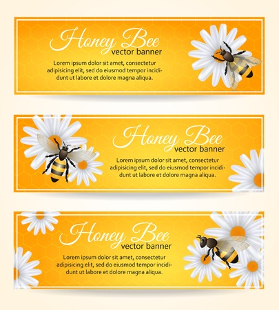 buzz: Honey bee on daisy flower with comb pattern banners set isolated vector illustration Illustration
