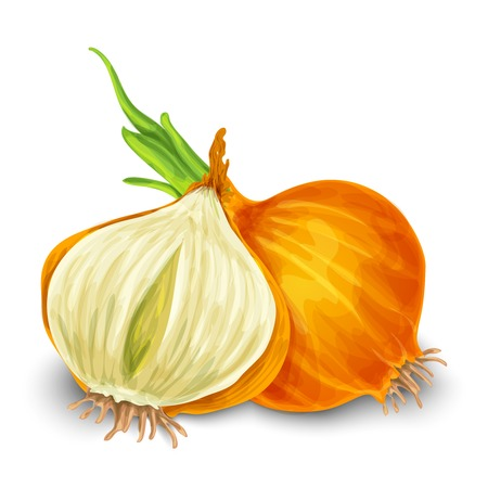 Verdura organico cipolla cibo taglio isolato su sfondo bianco illustrazione vettoriale Vettoriali