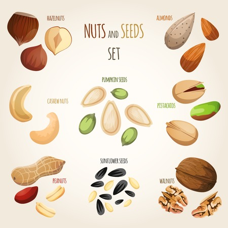 walnut: Nuts and seeds mix decorative elements set vector illustration