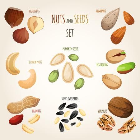 hazel nut: Nuts and seeds mix decorative elements set vector illustration