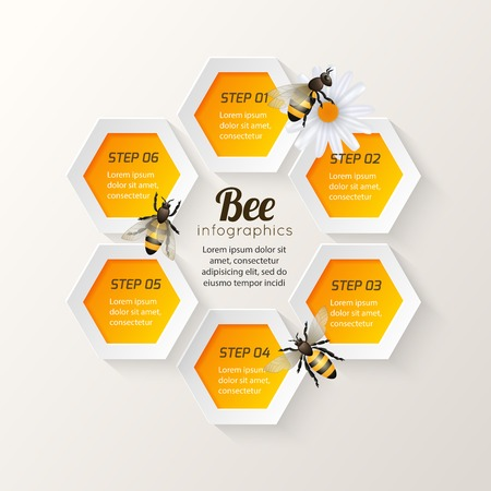 Honey bee on daisy and comb background hexagon steps infographic vector illustration