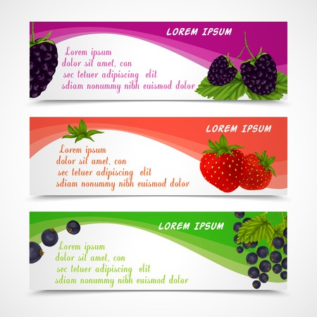 passion ecology: Natural organic forest berries banners set of blackberry strawberry black currant design template vector illustration